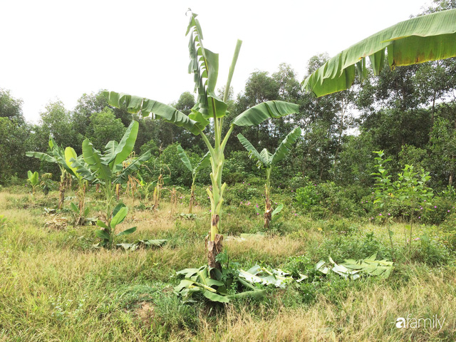 Câu chuyện của hai cô gái 9x về Hà Tĩnh mở trang trại rau quả sạch và giấc mơ sống gần hơn với thiên nhiên  - Ảnh 43.