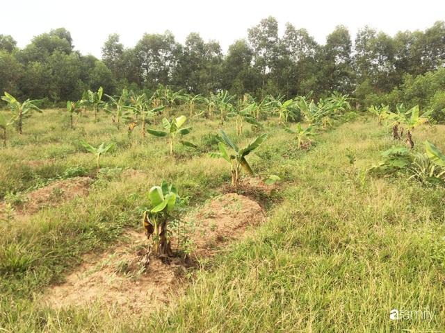Câu chuyện của hai cô gái 9x về Hà Tĩnh mở trang trại rau quả sạch và giấc mơ sống gần hơn với thiên nhiên  - Ảnh 44.