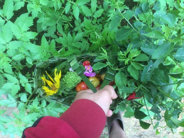 Câu chuyện của hai cô gái 9x về Hà Tĩnh mở trang trại rau quả sạch và giấc mơ sống gần hơn với thiên nhiên - Ảnh 48.