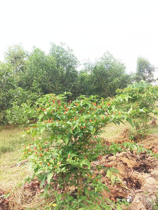 Câu chuyện của hai cô gái 9x về Hà Tĩnh mở trang trại rau quả sạch và giấc mơ sống gần hơn với thiên nhiên  - Ảnh 49.