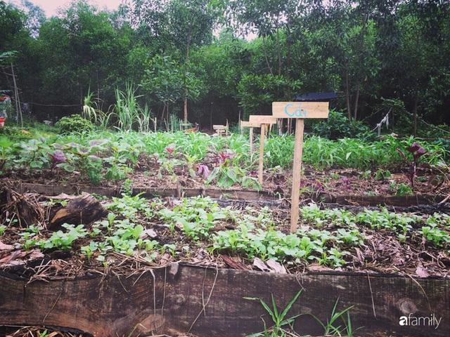 Câu chuyện của hai cô gái 9x về Hà Tĩnh mở trang trại rau quả sạch và giấc mơ sống gần hơn với thiên nhiên  - Ảnh 6.