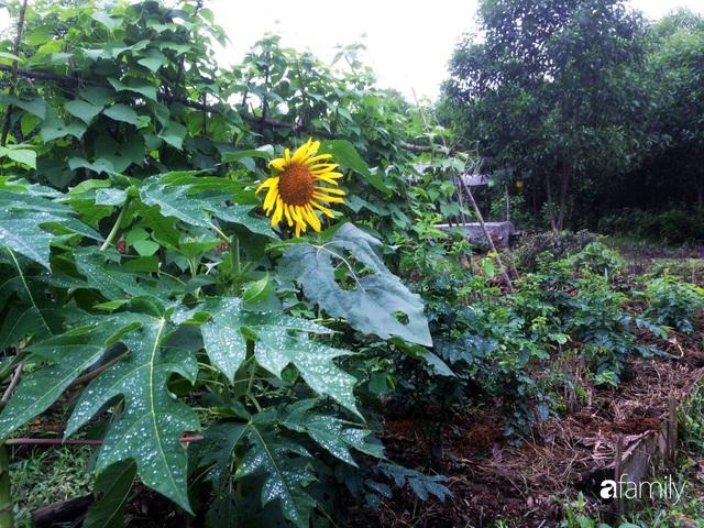 Câu chuyện của hai cô gái 9x về Hà Tĩnh mở trang trại rau quả sạch và giấc mơ sống gần hơn với thiên nhiên - Ảnh 58.