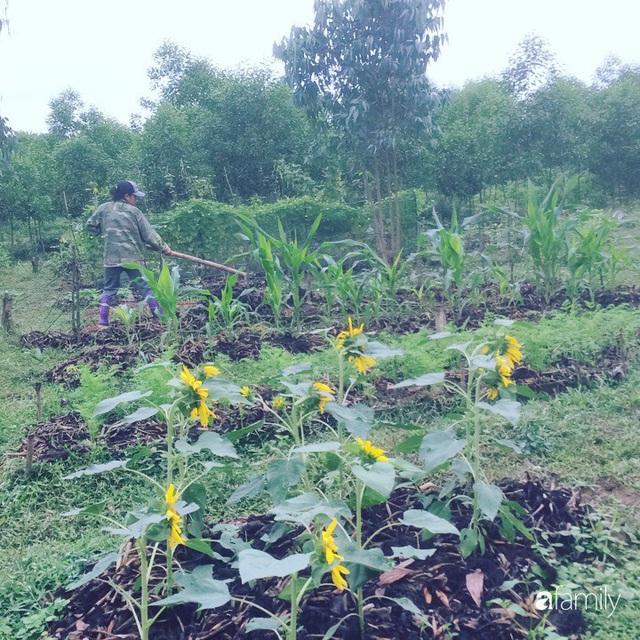 Câu chuyện của hai cô gái 9x về Hà Tĩnh mở trang trại rau quả sạch và giấc mơ sống gần hơn với thiên nhiên  - Ảnh 60.