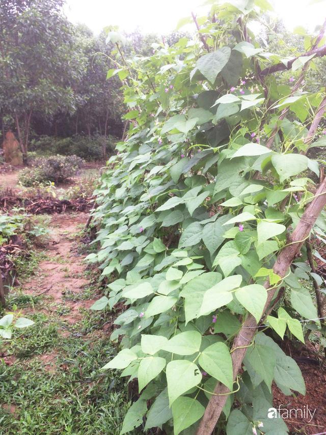 Câu chuyện của hai cô gái 9x về Hà Tĩnh mở trang trại rau quả sạch và giấc mơ sống gần hơn với thiên nhiên - Ảnh 62.