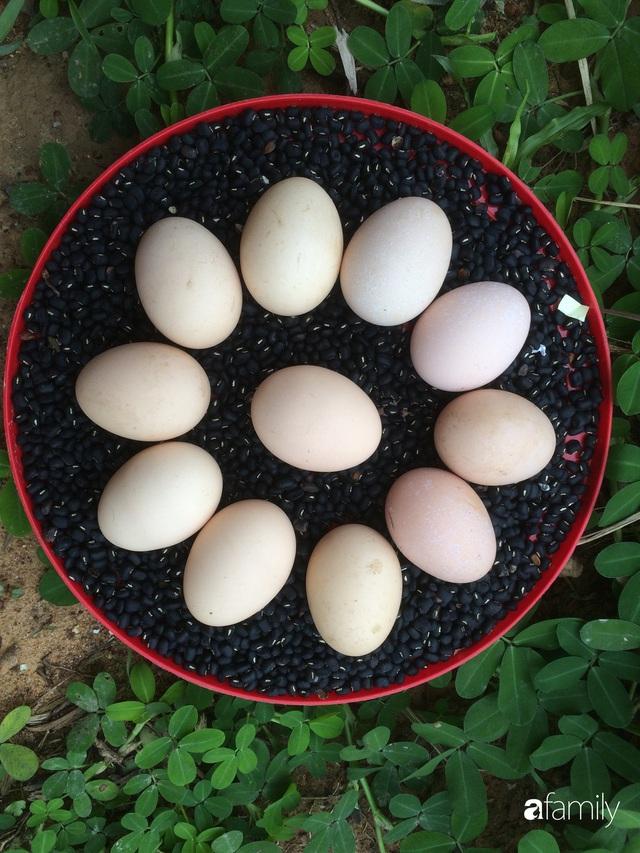 Câu chuyện của hai cô gái 9x về Hà Tĩnh mở trang trại rau quả sạch và giấc mơ sống gần hơn với thiên nhiên - Ảnh 10.