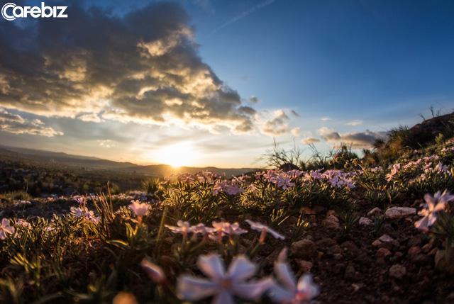 Đời người như hoa, kẻ nhạt là kẻ thơm: 4 chiếc chìa khóa mở ra cánh cửa hạnh phúc của bạn nên hiểu thấu - Ảnh 1.
