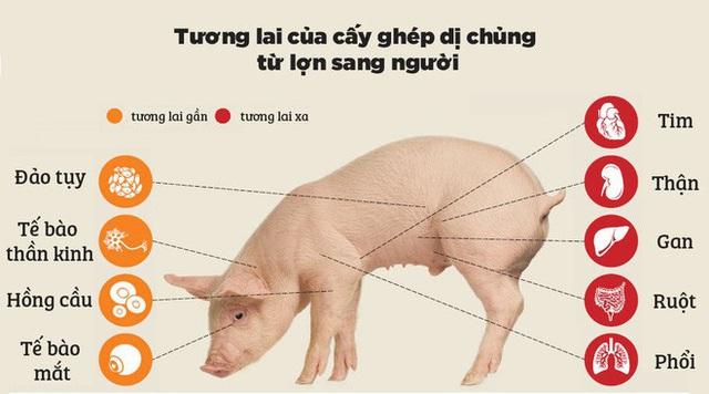 Đọc cuối tuần: Nội tạng từ những con lợn không tên sẽ cứu sống hàng ngàn bệnh nhân tuyệt vọng - Ảnh 6.