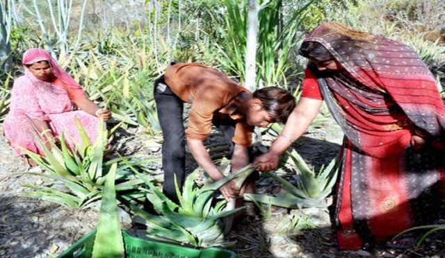 Phong tục tập quán lạ: Làng nghèo ở Ấn Độ trồng 111 cây xanh mỗi một bé gái được sinh ra - Ảnh 5.