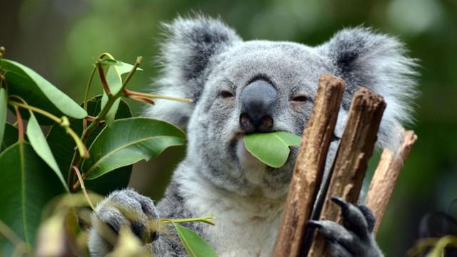 australia - photo 1 15729406854631518800386 - 10 điều thú vị về Australia mà bạn chưa biết