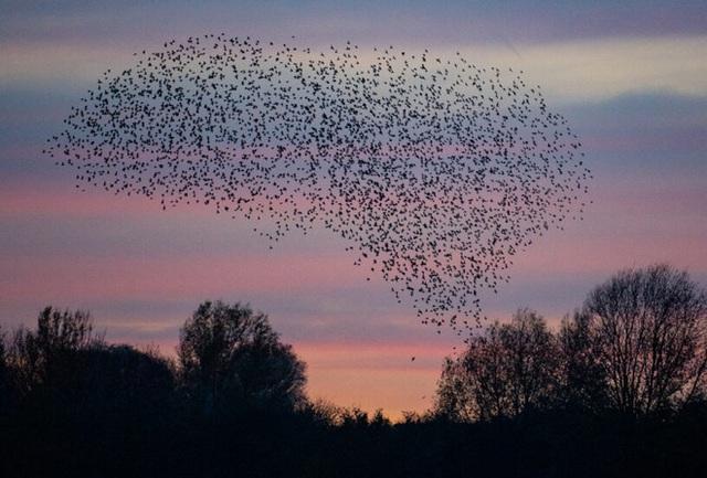 Hàng trăm con chim rơi xuống chết một cách bí ẩn, cảnh tượng hãi hùng như phim kinh dị - Ảnh 1.