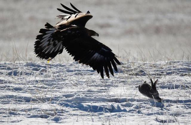 Những chú đại bàng vàng dũng mãnh bên cạnh thợ săn Kazakhstan - Ảnh 4.