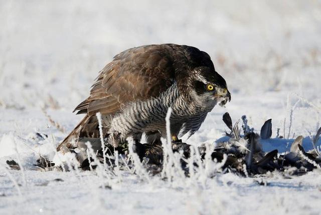 Những chú đại bàng vàng dũng mãnh bên cạnh thợ săn Kazakhstan - Ảnh 9.