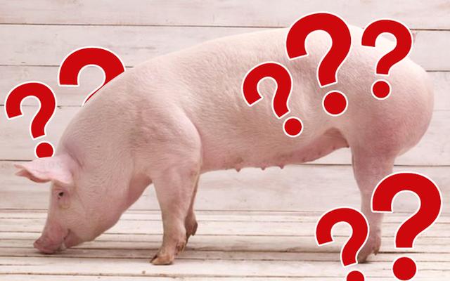 """Giá thịt lợn tăng mạnh, tim lên đến 305.000VND/kg và đây là """"báo giá"""" thịt để chị em tham khảo trước khi đi chợ"""