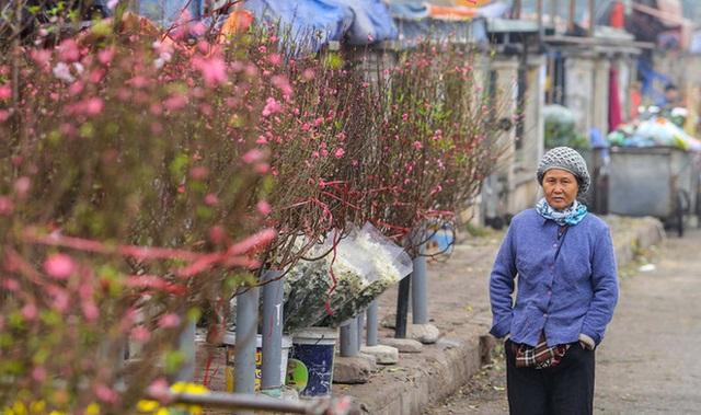 Đào Nhật Tân nở sớm, nhiều tuyến phố Hà Nội ngập tràn sắc xuân - Ảnh 2.