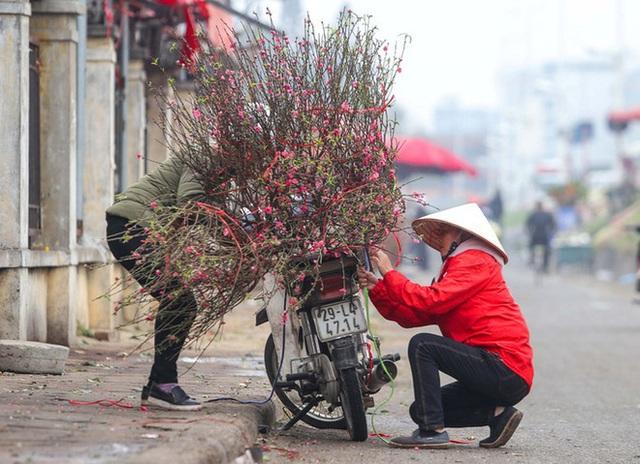Đào Nhật Tân nở sớm, nhiều tuyến phố Hà Nội ngập tràn sắc xuân - Ảnh 4.