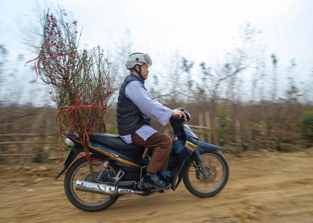 Đào Nhật Tân nở sớm, nhiều tuyến phố Hà Nội ngập tràn sắc xuân - Ảnh 10.