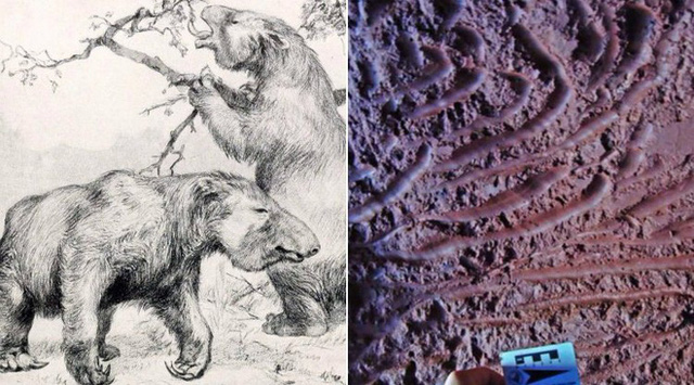 Đi tìm lời giải cho những đường hầm đá bí ẩn tại Nam Mỹ, đầy dấu vết móng vuốt của một loài thú khổng lồ - Ảnh 3.