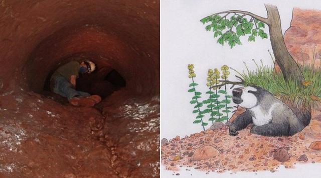 Đi tìm lời giải cho những đường hầm đá bí ẩn tại Nam Mỹ, đầy dấu vết móng vuốt của một loài thú khổng lồ - Ảnh 4.
