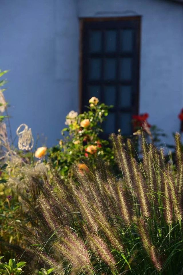 Cặp vợ chồng trẻ dành 5 năm để biến khu đất hoang rộng 6000m² thành khu vườn thiên đường của cỏ cây, hoa lá - Ảnh 14.