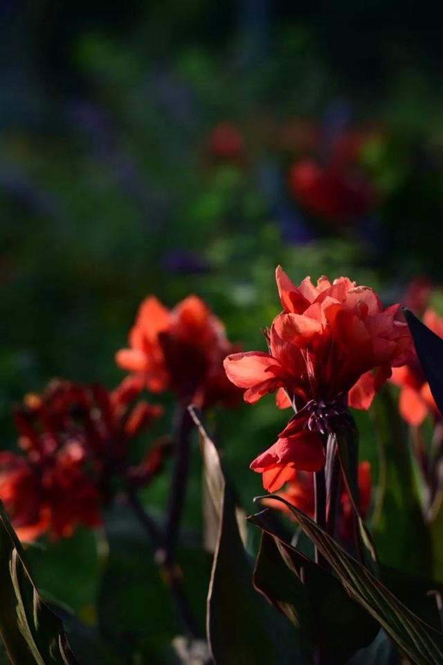 Cặp vợ chồng trẻ dành 5 năm để biến khu đất hoang rộng 6000m² thành khu vườn thiên đường của cỏ cây, hoa lá - Ảnh 10.