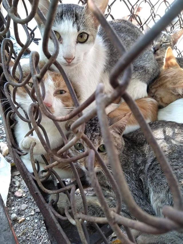 Nở rộ ngành công nghiệp lông mèo tàn bạo tại Trung Quốc khiến hàng trăm nghìn người yêu động vật thế giới xót xa - Ảnh 6.