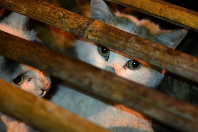 Nở rộ ngành công nghiệp lông mèo tàn bạo tại Trung Quốc khiến hàng trăm nghìn người yêu động vật thế giới xót xa - Ảnh 7.