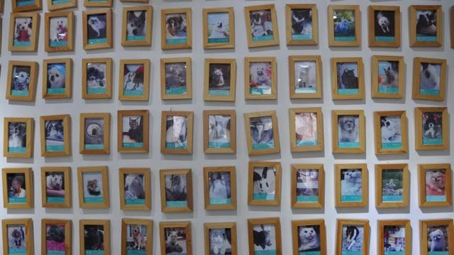 Ngành công nghiệp chăm sóc thú cưng tỷ USD ra đời khi hàng triệu người trẻ cô đơn, trầm cảm phải tìm đến chó mèo để giảm muộn phiền - Ảnh 4.