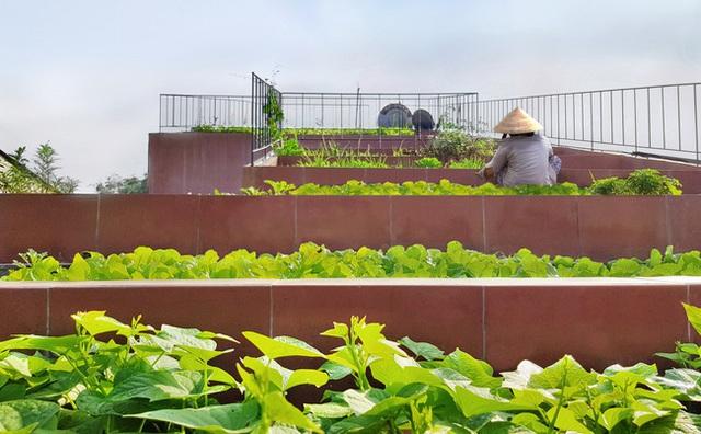 Vườn rau 7 bậc thang xanh tươi trên mái nhà của vợ chồng trung niên được các con xây tặng ở Quảng Ngãi - Ảnh 2.