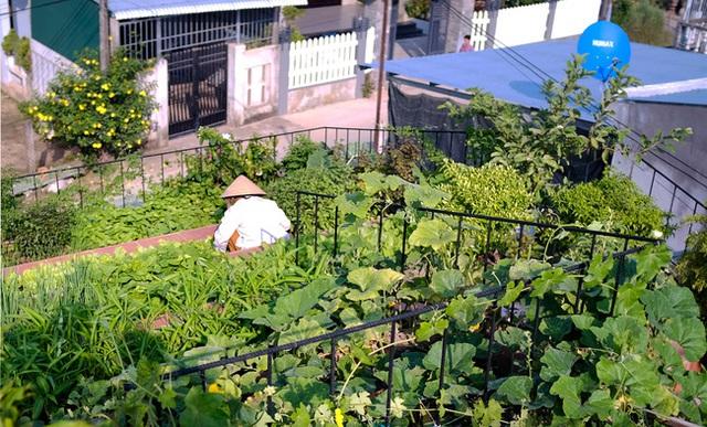 Vườn rau 7 bậc thang xanh tươi trên mái nhà của vợ chồng trung niên được các con xây tặng ở Quảng Ngãi - Ảnh 4.