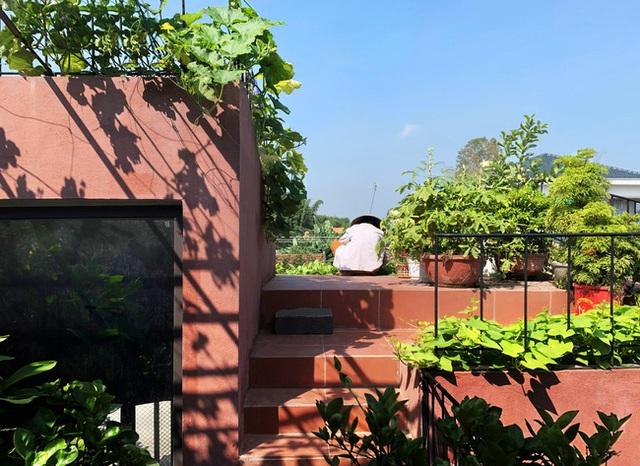 Vườn rau 7 bậc thang xanh tươi trên mái nhà của vợ chồng trung niên được các con xây tặng ở Quảng Ngãi - Ảnh 5.