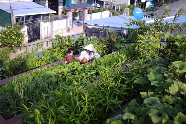 Vườn rau 7 bậc thang xanh tươi trên mái nhà của vợ chồng trung niên được các con xây tặng ở Quảng Ngãi - Ảnh 7.