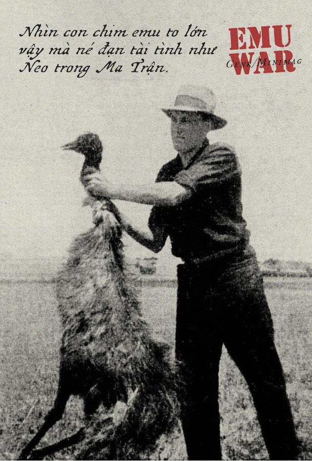 Chiến tranh Emu: thảm bại của quân đội Úc khi cố gắng đối đầu với những con chim vô cùng kỳ lạ - Ảnh 8.