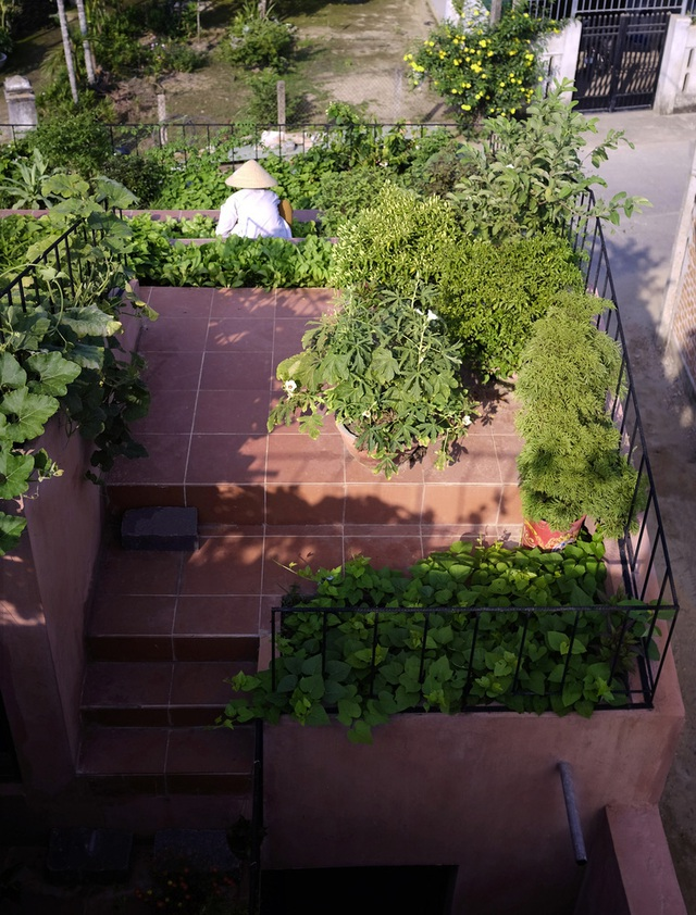 Vườn rau 7 bậc thang xanh tươi trên mái nhà của vợ chồng trung niên được các con xây tặng ở Quảng Ngãi - Ảnh 8.