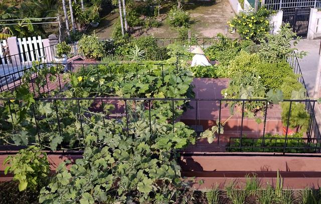 Vườn rau 7 bậc thang xanh tươi trên mái nhà của vợ chồng trung niên được các con xây tặng ở Quảng Ngãi - Ảnh 9.