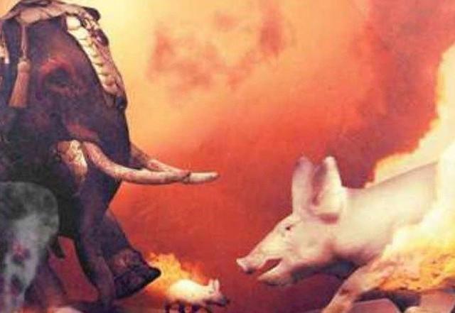 Câu chuyện về War Pig và Pig War và : từ những con lợn quật ngã cả voi, đến nguy cơ gây đại chiến giữa 2 cường quốc - Ảnh 7.