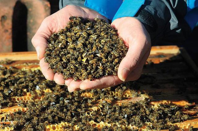 Lượng côn trùng trên thế giới đang suy giảm với tốc độ kỷ lục, gây ảnh hưởng tiêu cực đến môi trường toàn cầu - Ảnh 1.