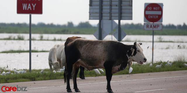 Bill Gates chuẩn bị sử dụng quỹ đầu tư trị giá 1 tỷ USD để ngăn chặn nạn... xì hơi ở loài bò trên toàn thế giới, lý do khiến nhiều người gật gù - Ảnh 2.