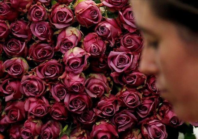 Đây là lý do những bông hồng Valentine đang giết Trái Đất, hãy trở thành một người tặng quà sáng suốt! - Ảnh 3.