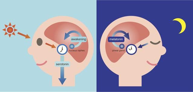 Đảo lộn nhịp sinh học sau Tết: Đây là 6 mẹo giúp bạn khắc phục - Ảnh 5.