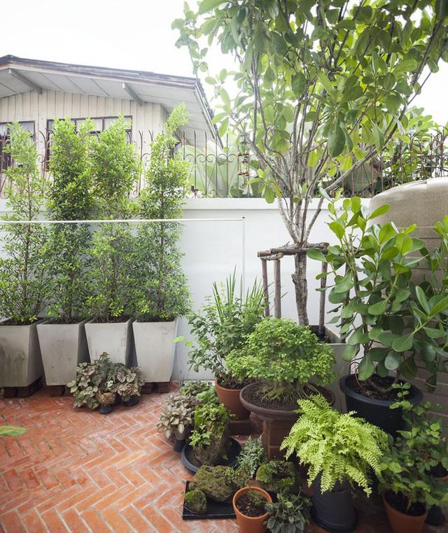 Sau 15 năm bỏ hoang, ngôi nhà 300m² được cặp vợ chồng trẻ hồi sinh cực hiện đại lại có vườn bonsai đáng mơ ước ở ban công - Ảnh 7.