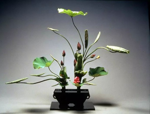 Sau 10 năm ẩn dật, người phụ nữ Nhật Bản trở thành kho báu quốc gia khi được mọi người mệnh danh là bậc thầy cắm hoa - Ảnh 14.