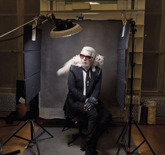 Cuộc sống vương giả của mèo Choupette - tình yêu lớn nhất đời Karl Lagerfeld - Ảnh 1.