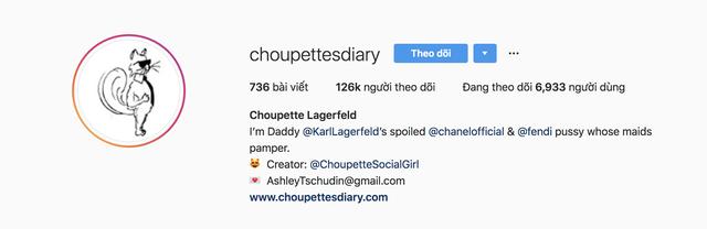 Cuộc sống vương giả của mèo Choupette - tình yêu lớn nhất đời Karl Lagerfeld - Ảnh 6.