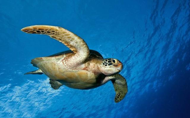 Chuyên gia: 3 đặc điểm giúp rùa trở thành loài sống thọ nhất thế giới mà con người nên học - Ảnh 3.