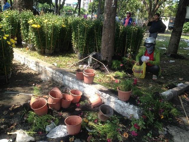 Tiểu thương vứt hàng trăm chậu hoa ế vào xe rác vì sợ hôi của - Ảnh 6.