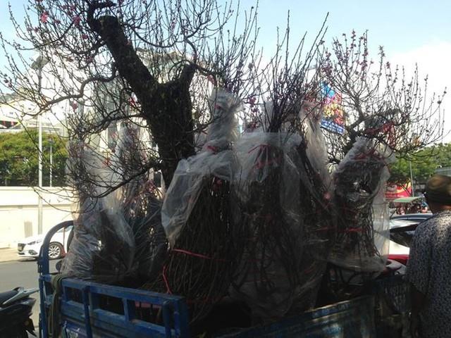 Tiểu thương vứt hàng trăm chậu hoa ế vào xe rác vì sợ hôi của - Ảnh 8.