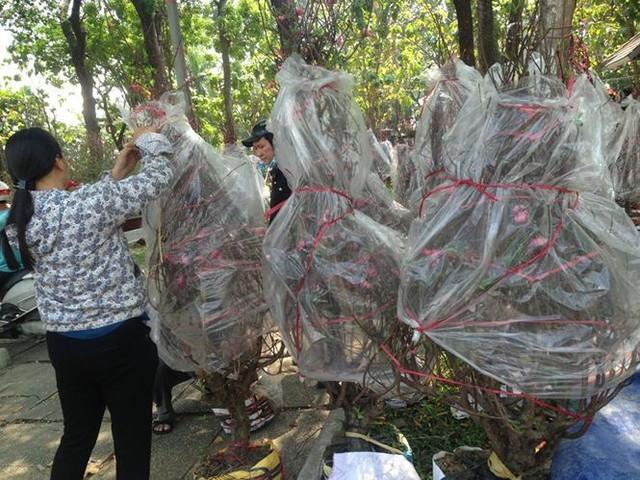 Tiểu thương vứt hàng trăm chậu hoa ế vào xe rác vì sợ hôi của - Ảnh 9.