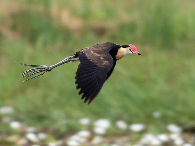 Câu chuyện cảm động về chú chim có đến... 10 cái chân đang gây bão mạng xã hội - Ảnh 3.