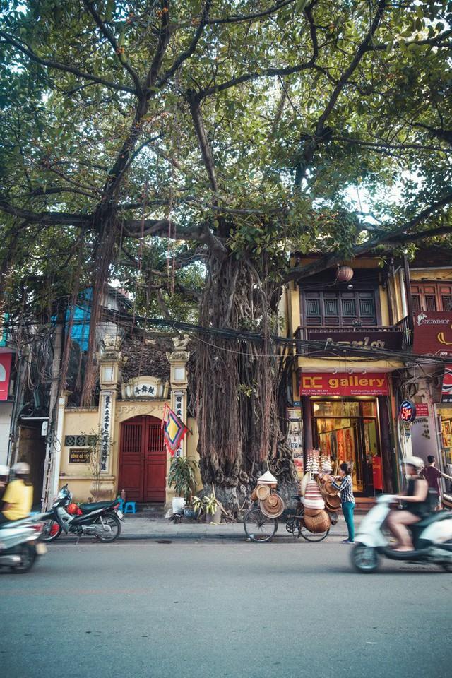 Góc tự hào: Việt Nam được tạp chí Forbes bình chọn là 1 trong 14 điểm đến của năm 2019 - Ảnh 2.