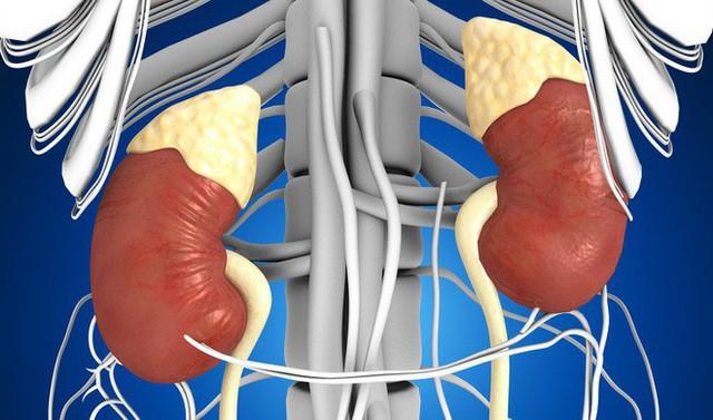 Ai quan tâm đến sức khoẻ tim, gan, phổi, thận cần phải biết điều này - Ảnh 3.